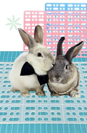 alfombrilla para conejos para jaulas recomendable para evitar enfermedades