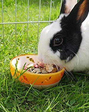 cuenco para alimentos y dulces comedero para conejos y animales pequeños