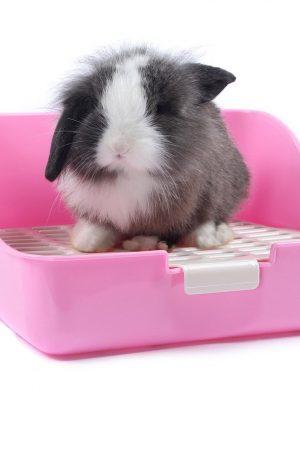 Caja de Arena para Conejos para Adulto