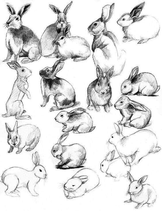 colorear-conejos-sombras