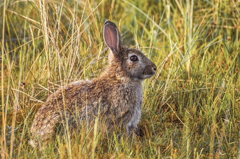 foto donde viven los conejos salvajes
