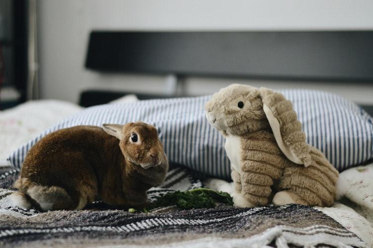 conejos domesticos