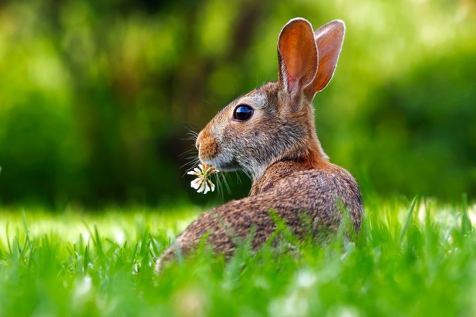 donde viven los conejos