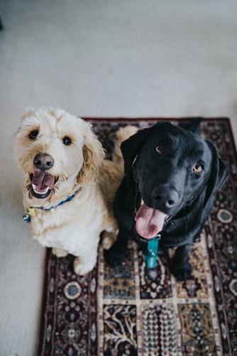 perros-y-conejos