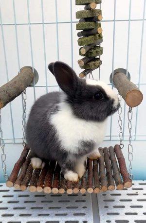 columpio de madera para conejos, ardillas y chinchillas