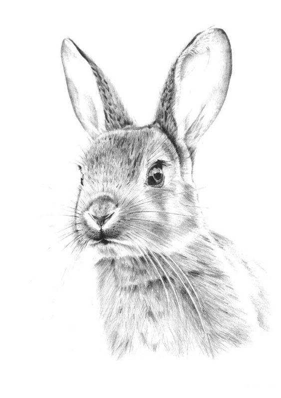 dibujos-de-conejos-realista