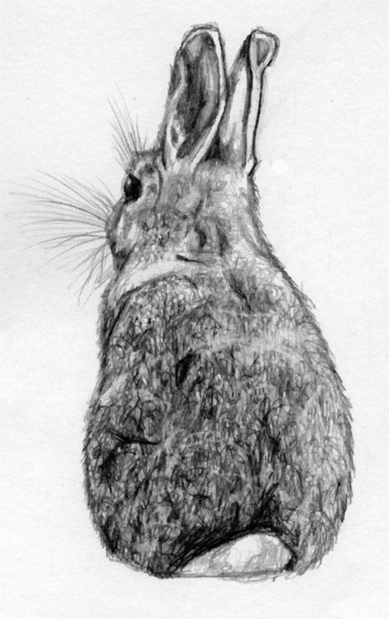 dibujos-de-conejos-a-lapiz