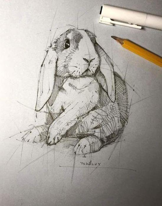 dibujo-de-conejo-hecho-a-mano