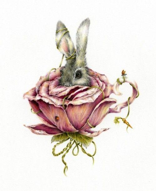 imagen-conejo-color