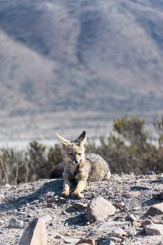 Depredadores de conejos